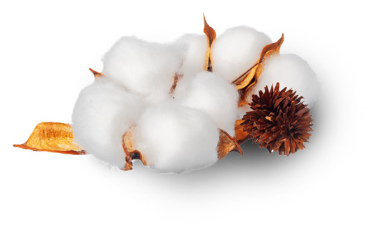 Natural Cotton